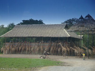 Safari World - Safari Park Bangkok Batch 2 Photo 6