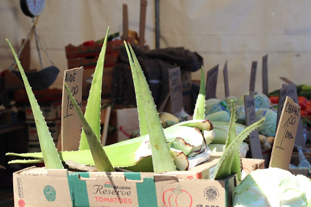 edible aloe for sale at the Haymarket