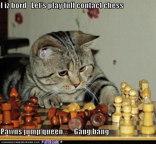 Kittah cheating at chess...