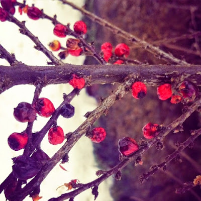 winter, hiver, creuse, Limousin, nature, France, countryside, branches, berries, trees, bushes,