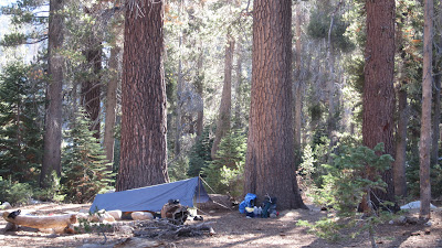 We camped under towering pines