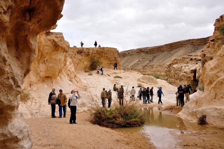 Вода в пустыне. Эйн Йоркам. Экскурсия гида Светланы Фиалковой в пустыню Негев.