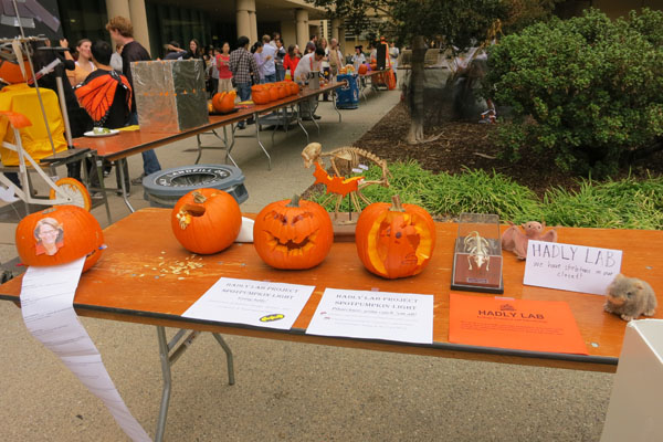 Hadly Lab Pumpkin Fest