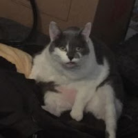 Seivan Engelhardt's avatar