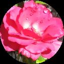 Flor Suragrande