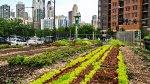 «Растущие города» / Growing cities