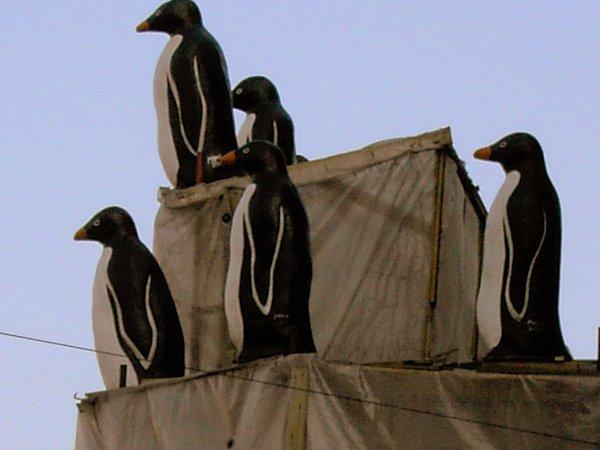Пингвины на крыше - музей Арктики и Антарктики