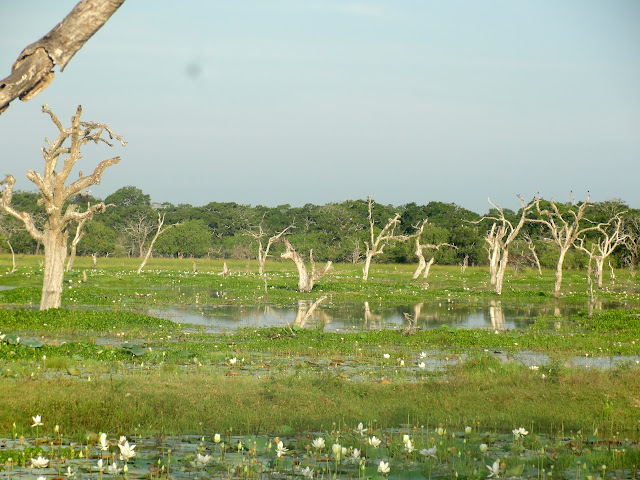 Yala-National-Park-6