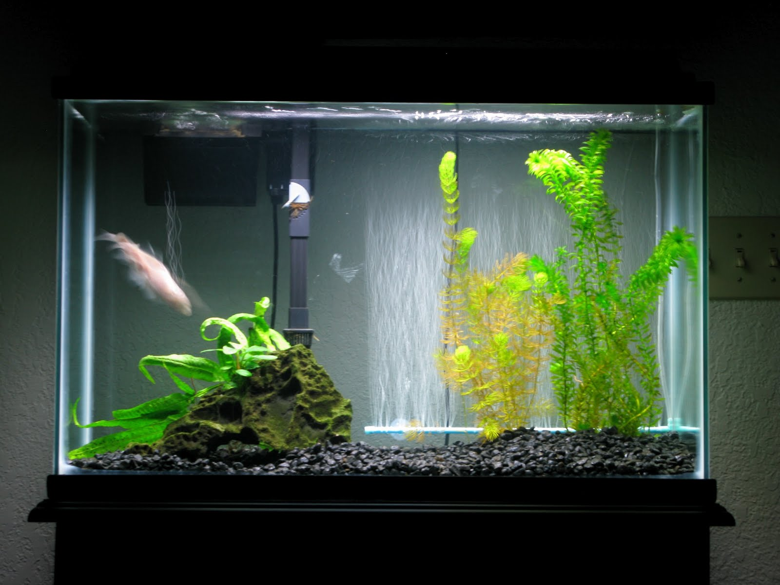 The ecology of the aquarium and how it led me to for Low maintenance fish tank