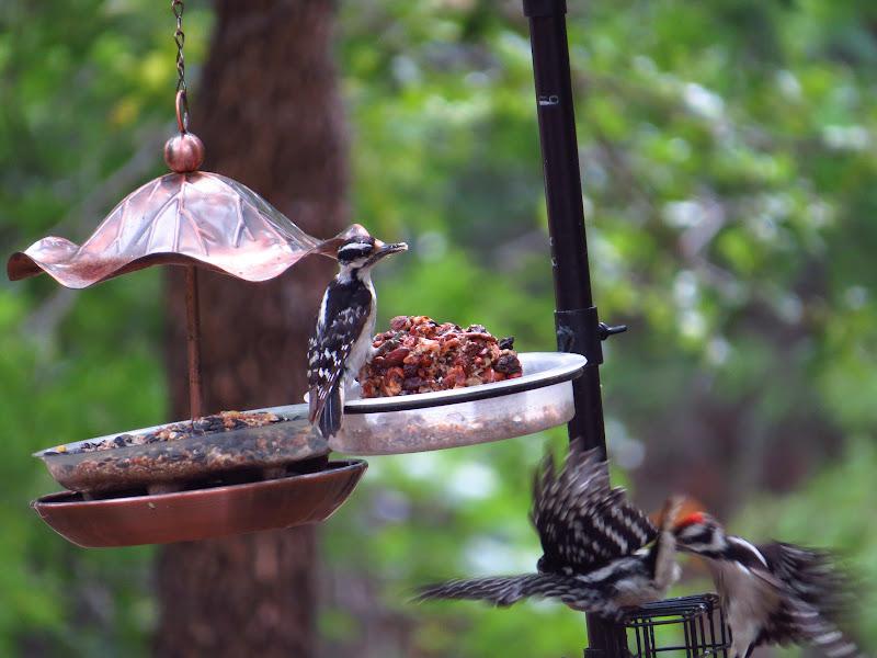 Alimentando aves en el invierno - Prairie Birder