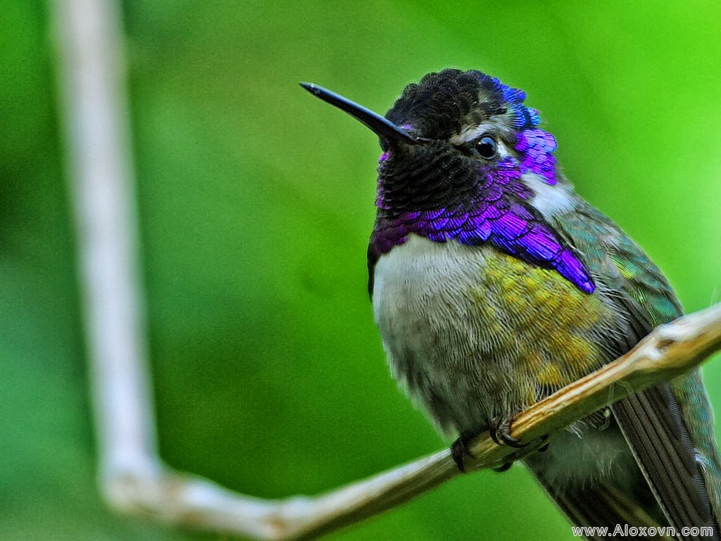 Hóa giải thuật toán chim ruồi ?