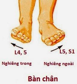 chi phối vận động ở bàn chân