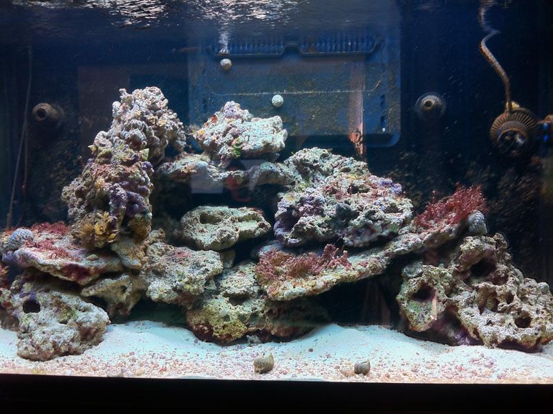 """Le Red Sea Max 250 de """"Kust"""" Aqua01071"""