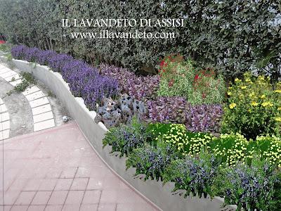 Progetti giardini online gratis progetti giardini privati for Piante perenni per bordure