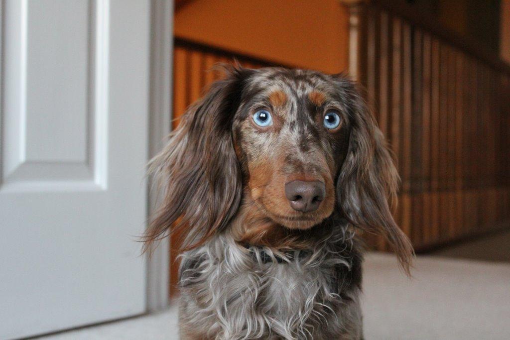 MouseCaves.com: MouseCaves for Dogs - Best Friends Pet Care