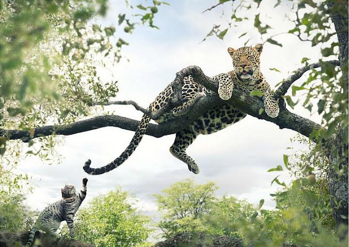 Сафари за домашни котки