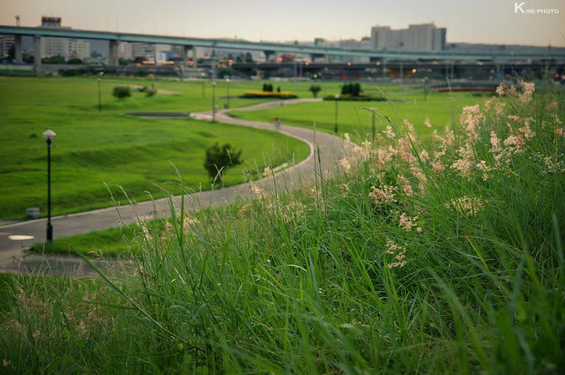 水漾公園.新北大橋