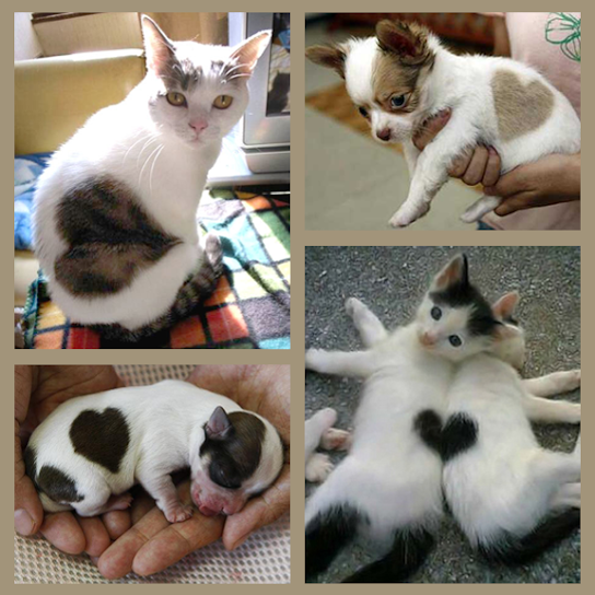 Heart-shaped markings on cuddly kittens and precious puppies