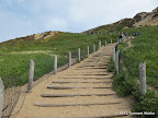 Sand ladder leading to Fort Funston