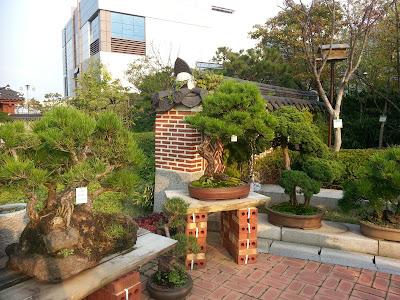 Бонсай - красота в совершенстве - Страница 5 20121021_160514