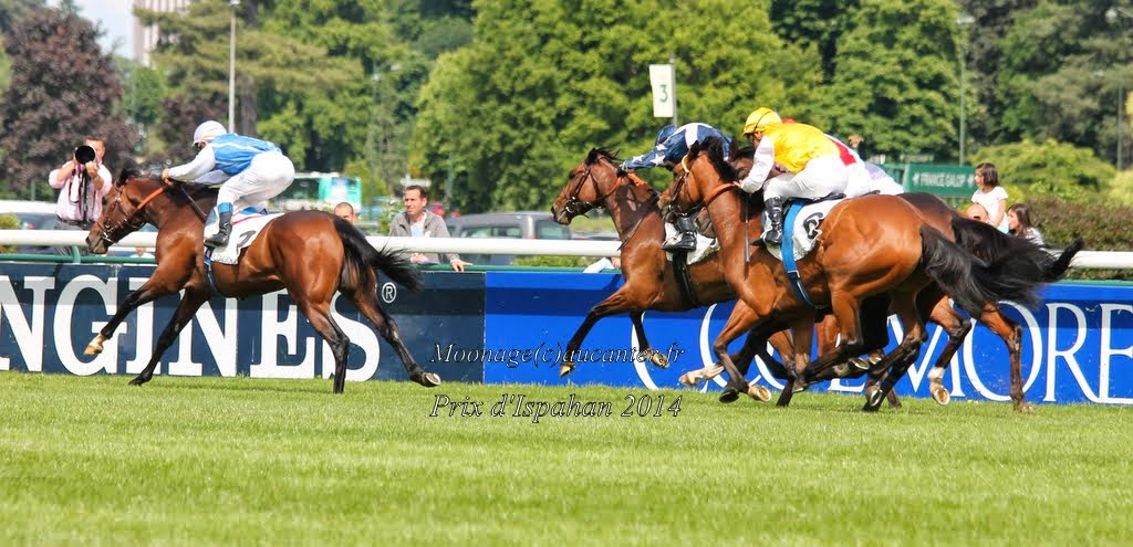 Photos Longchamp 25-05-2014 IMG_1332