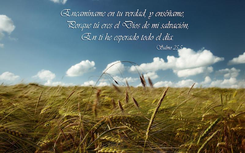 Salmo 25.5