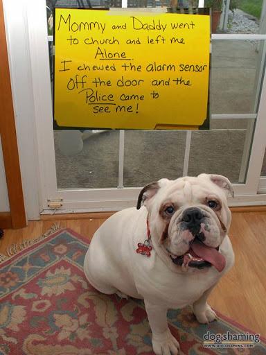 Sarge-in-trouble-2015-03-4-09-24.jpg