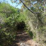 Track in Botany Bay National Park (309083)