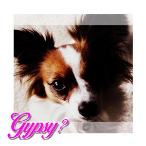 Whois Gypsy?!