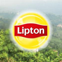 Lipton - Türkiye  Google+ hayran sayfası Profil Fotoğrafı