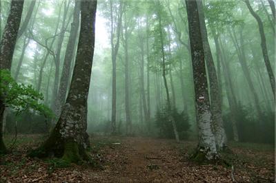 La niebla recubre el hayedo