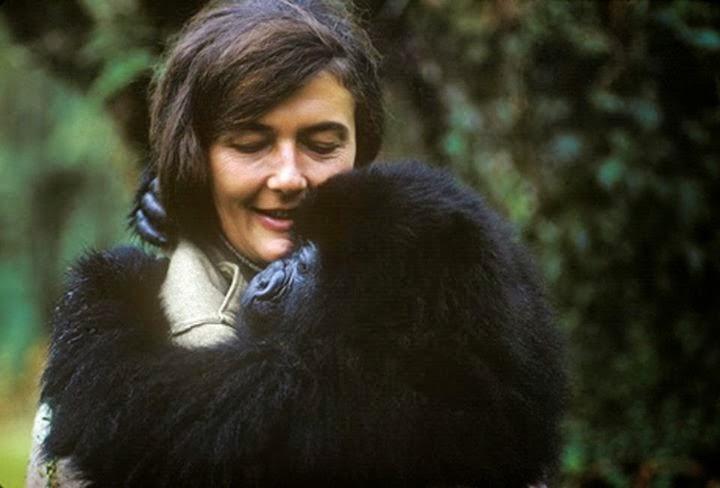 Dian Fossey segurando um de seus amados Gorilas
