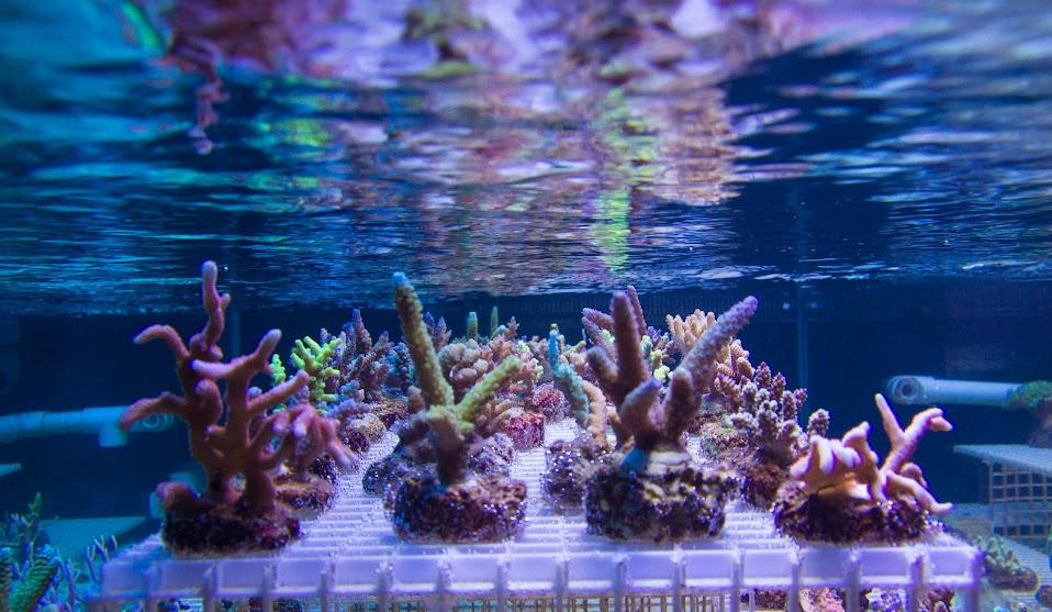 koral_11.JPG