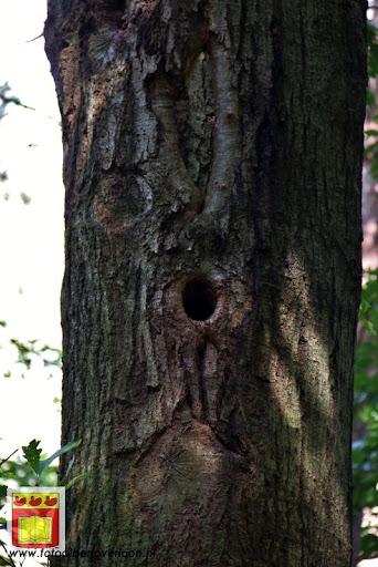 excursie in bossen  van overloon 18-08-2012 (29).JPG