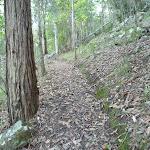 Steep hill but gentle track north of Cedar Brush track head (365615)