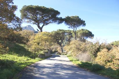 Sizilien - Landstraße mit Bäumen auf dem Weg nach Sclafani Bagni