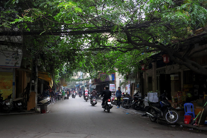 Leafy green street, Old Quarter