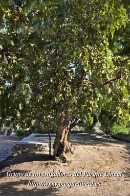 el moral centenario de la cuarta esclusa del real canal del manzanares