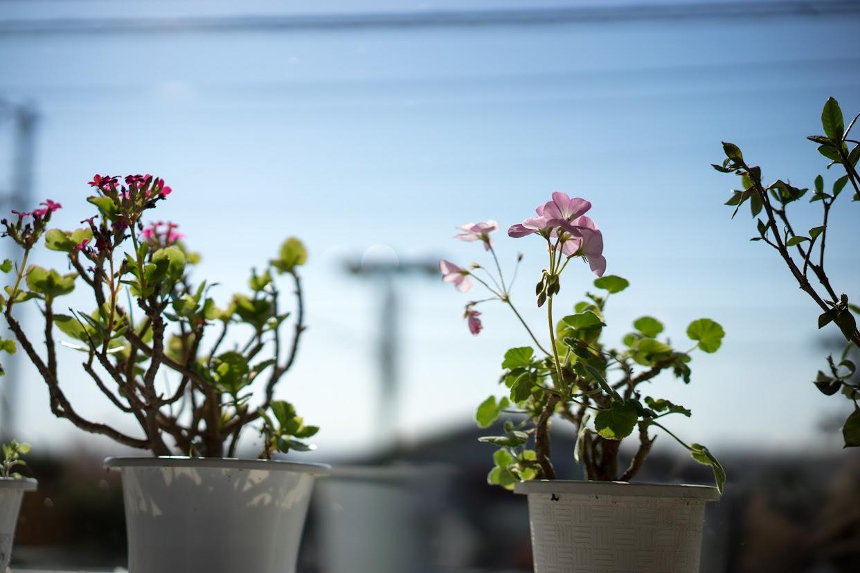 窓際を飾る花