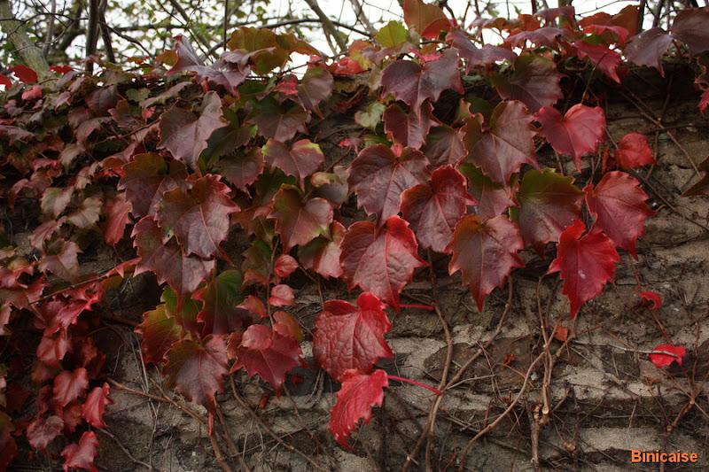 Feuilles d'automne. dans Fleurs et plantes