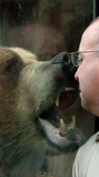 Urso pardo vs Urso polar Ddsdsddsd