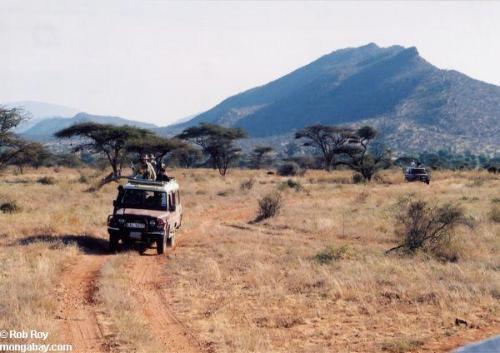 safari_001