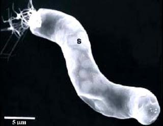 alien life Bacteria in Meteorites