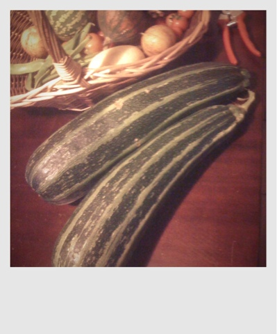 zucchini from the garden