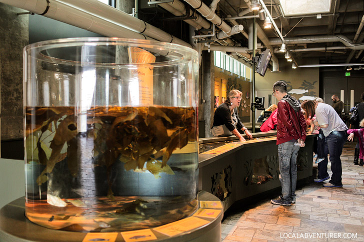 Aquarium in Monterey California.