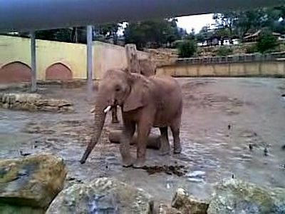 Слон в зоопарке в Лиссабоне фото