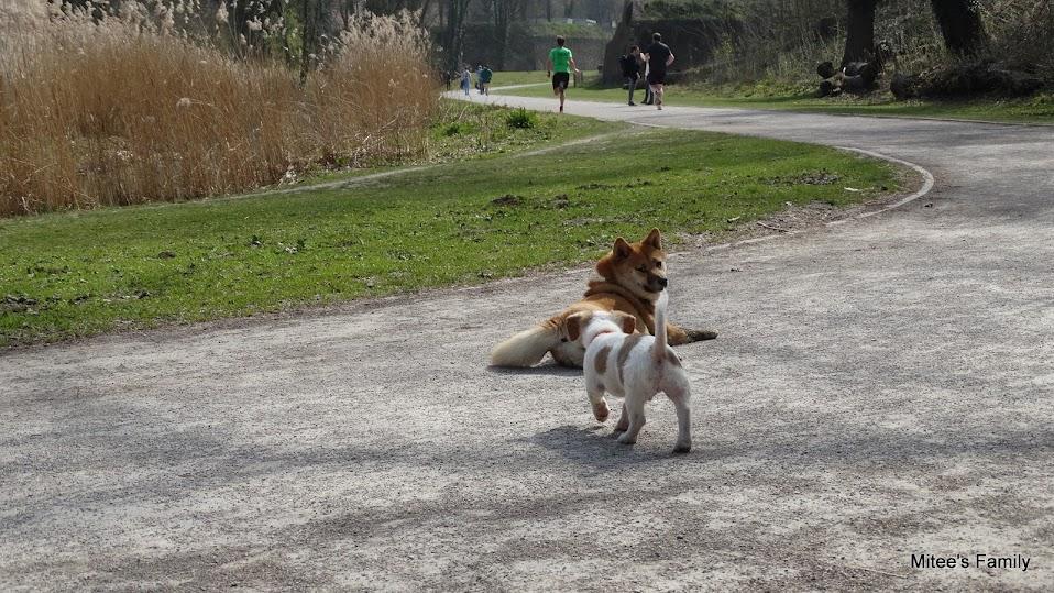 Balades canines en Nord (59)/Pas de Calais (62) - Boulogne-sur-Mer, Calais et Lille - Page 4 DSC01908