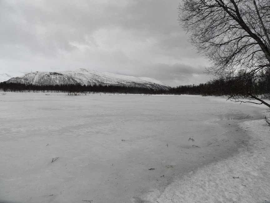 Norvège mars 2014 SAM_1531