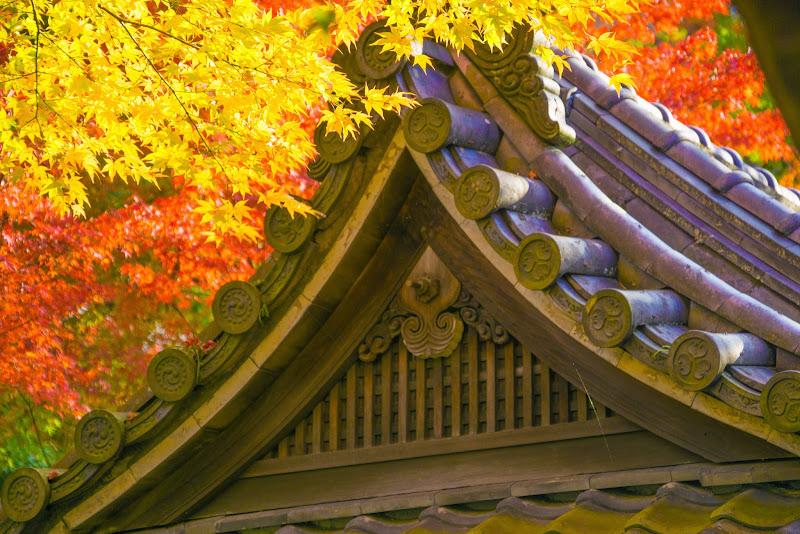 京都 永観堂 紅葉 写真7