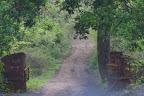Carretera de entrada al parque